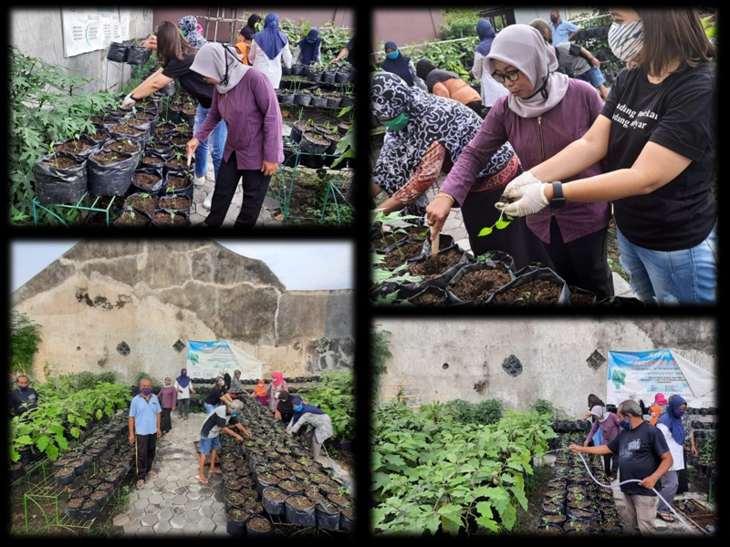 Monitoring Penanaman Bibit Terong dan Tomat di Kebun AMIGO RW 13 Kelurahan Rejowinangun