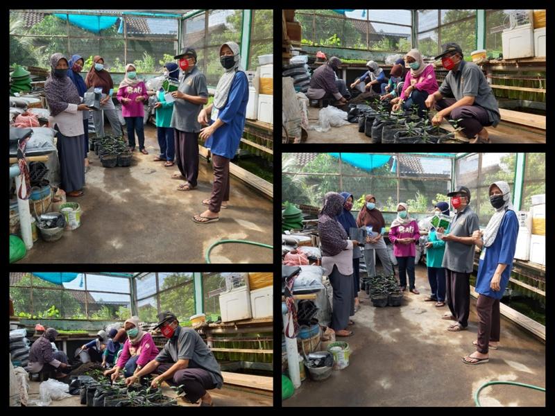 Praktek Lapangan Bimtek Pelatihan Agro